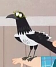 Common Magpie Atchoo.jpg