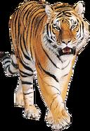 NatureRules1 Bengal Tiger