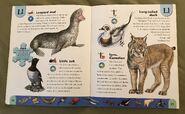 Polar Animals Dictionary (14)