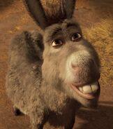 Profile - Donkey