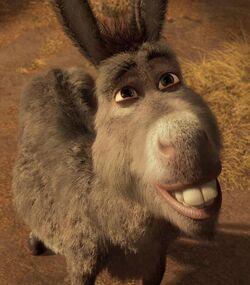 Profile - Donkey.jpg