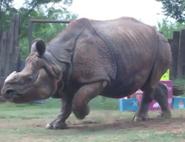 Rolling Hills Zoo Indian Rhinoceros