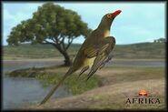 Afrika Oxpecker