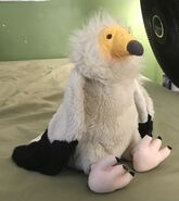 Ernie the Egyptian Vulture