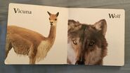 James Balog's Animals A to Z (12)