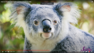SciShow Kids Koala