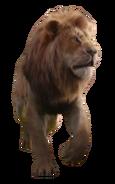 Simba (TLK2019)