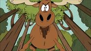 TLH Moose