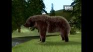 UTAUC Grizzly Bear