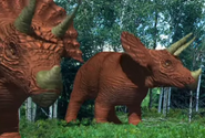Zoboomafoo Triceratops