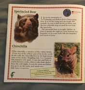 Animals of South America (12)