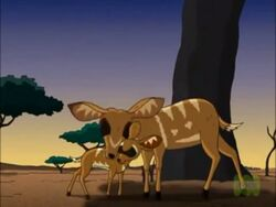 Bushbuck mother and child.jpg