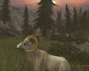 Dall sheep in Cabela's 2