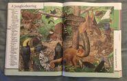 Fantastic World of Animals (66)