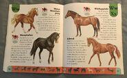 Horse Dictionary (25)