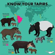 Know Your Tapirs