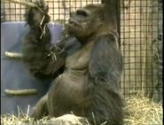 LPZ Gorilla