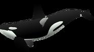 NatureRules1 Orca