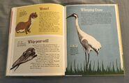 The Dictionary of Ordinary Extraordinary Animals (56)