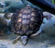 Turtle oregon zoo