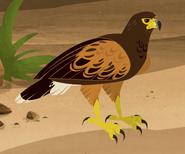 Wild Kratts Harris' Hawk