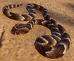 Adder, Puff (Planet Zoo)