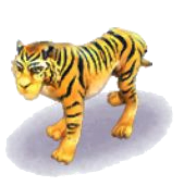 Animal-Tiger