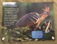 Bizarre Birds (1)