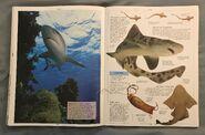 DK Encyclopedia Of Animals (148)