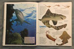 DK Encyclopedia Of Animals (148).jpeg