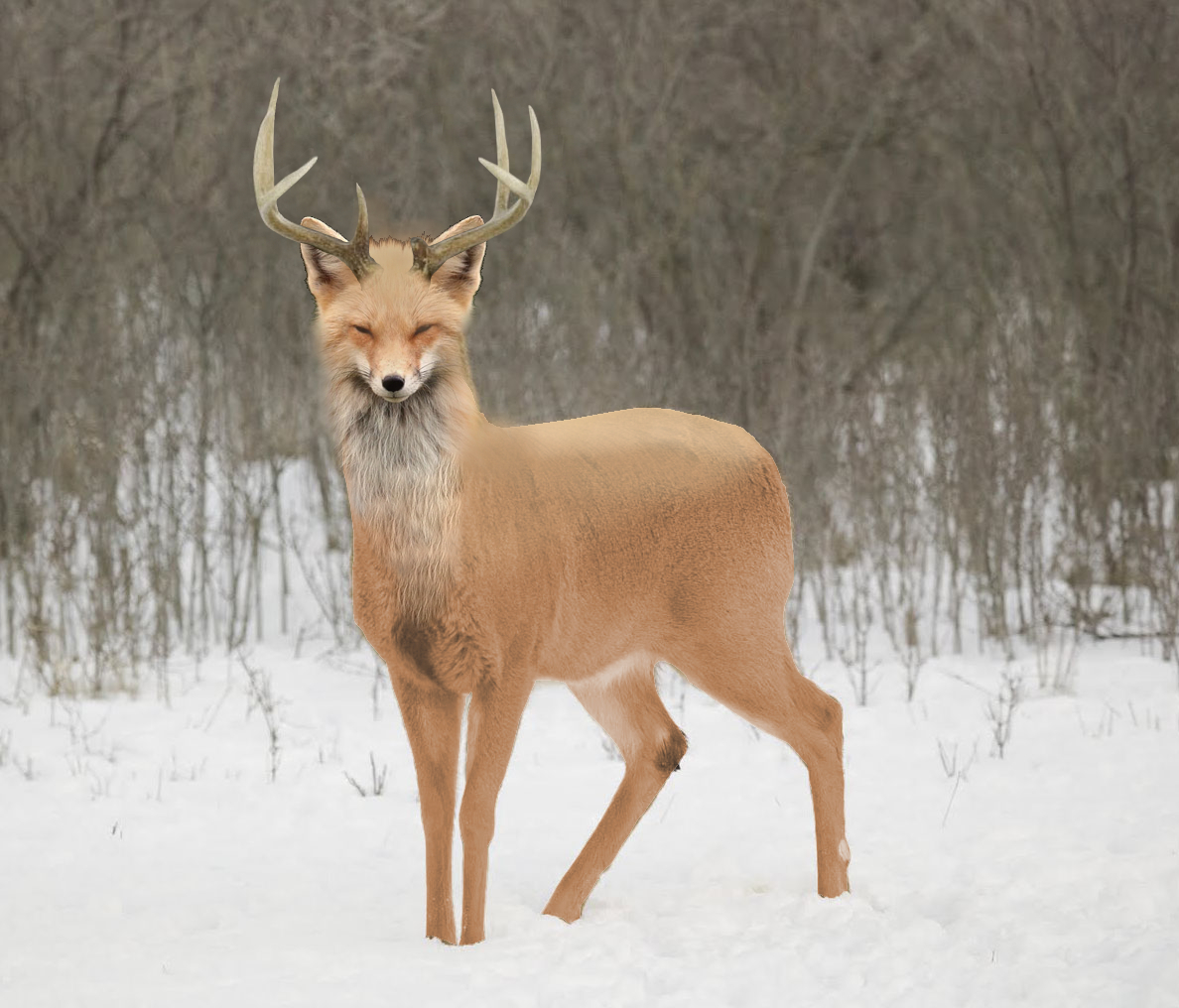 Deerfox