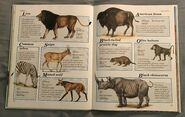 Macmillan Animal Encyclopedia for Children (14)