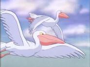 SftB Pelicans