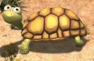 Tortoise jungle beat