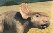 Arnold The Pachyrhinosaurus