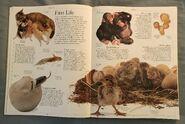 DK Encyclopedia Of Animals (12)