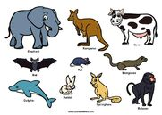 Elephant Mandrill Baboon Springhare Rabbit Dolphin Mongoose Meerkat Rat Bat Cow Kangaroo Hyrax Cheetah Giraffe and Okapi