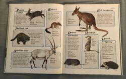 Macmillan Animal Encyclopedia for Children (19).jpeg