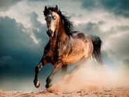 Mustang Horse.(V2)