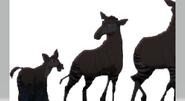Okapis From Company Idiot