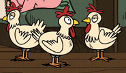 TLH Chickens