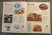 The Kingfisher First Animal Encyclopedia (5)