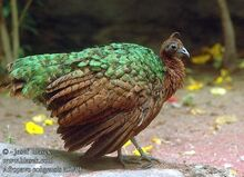 87ef75b0ad5f948bc772025cabb76ce4--congo-wild-birds.jpg