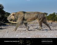 American Cave Lion