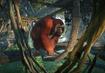 Bornean-orangutan-planet-zoo