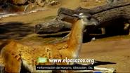 El Paso Zoo Guanaco