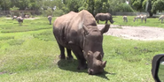 Lion Country Safari Rhino
