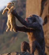 Live Action Rafiki