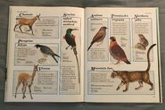Macmillan Animal Encyclopedia for Children (30)