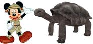 Mickey meets Galapagos Tortoise